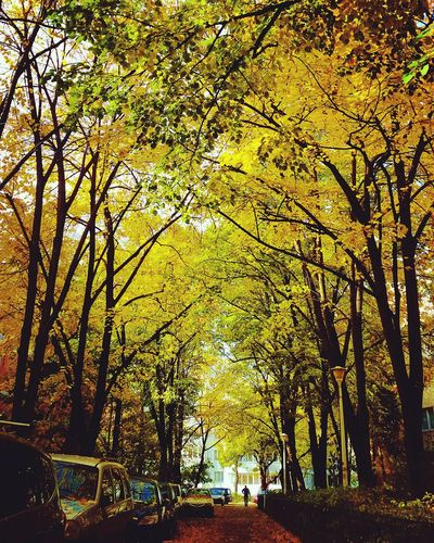 Alleyway Alley Of Trees Alley Photography Alley Autumn Colors Autumn Leafs Autumnbeauty Autumn Trees Nature Tree Yellow Outdoors City Green Leaf Neighborhood Autumn🍁🍁🍁 Instalike Instapic Instanature Instaautumn Instatrees Instaart