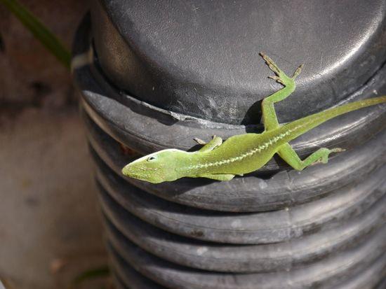 One Animal Animals In The Wild Animal Themes Animal Wildlife Reptile Lizard Close-up No People Day Outdoors Nature