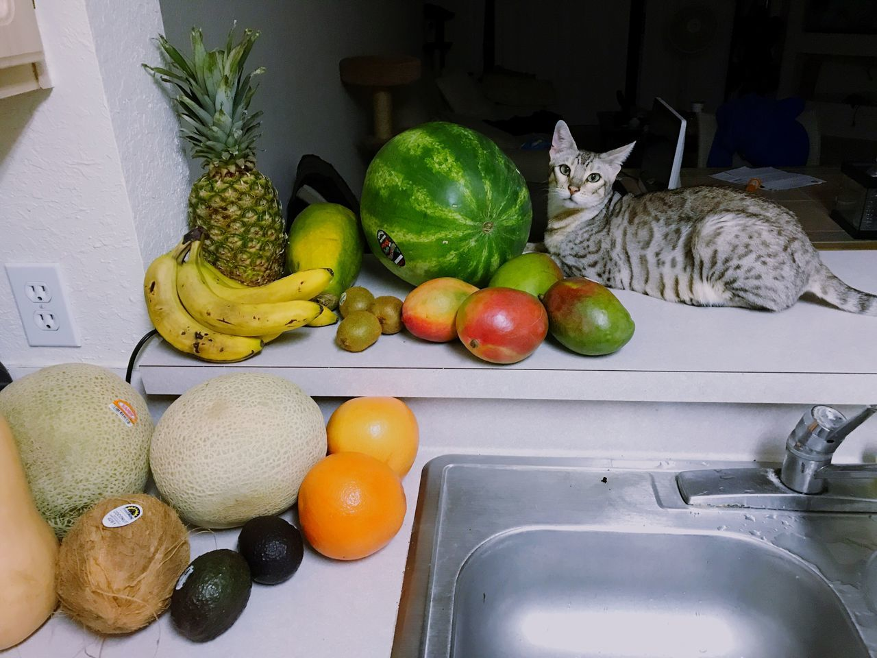 indoors, domestic kitchen, fruit, no people, kitchen, vegetable, domestic room, domestic cat, freshness, food, day, mammal