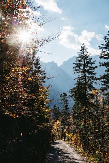 Alpine landscape in Tyrol, Austria (Karwendel) Sunbeam Mountain No People Lens Flare The Way Forward Non-urban Scene Outdoors Bright Sun Day Scenics - Nature Sky Sunlight Tree Nature Tranquility Idyllic Change Tranquil Scene Karwendel Alps Cover Tyrol Austria Alpine Landscape