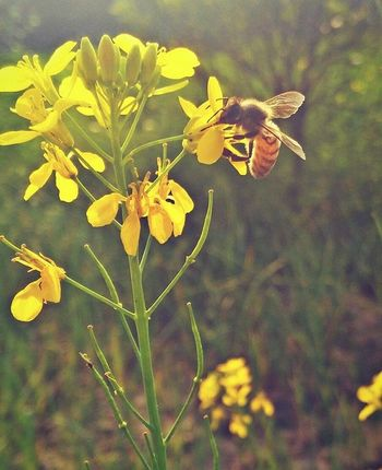 The flower doesn't dream of the bee it blooms and the bee comes.... Colorsfrompakistan PhonePhotography Paki_photographers Vscopakistan The Essence Of Summer