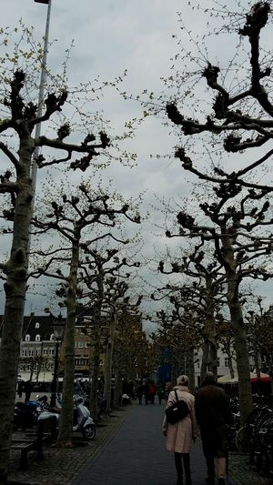 Trees Dark Bark Contrast with the Grey Sky Vrijthof Square Maastricht picture taken by my Friend Ivonne Weda (c) 2016 Shangita Bose All Rights Reserved From My Point Of View Up Close Street Nature's Diversities