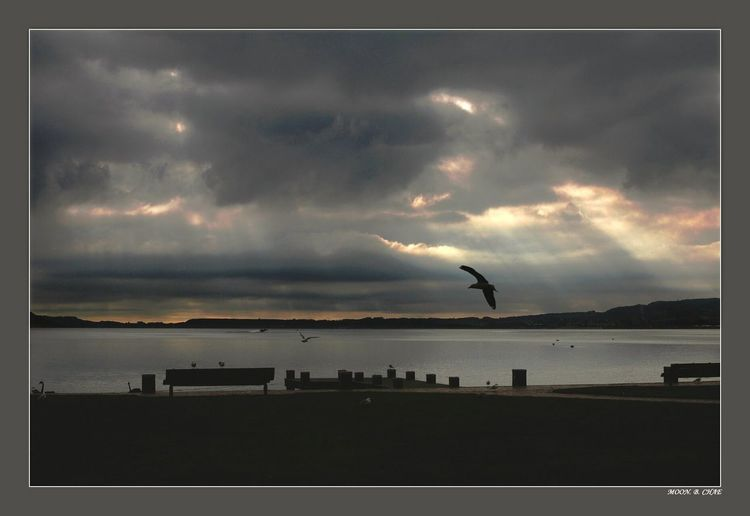 seagull Dramatic Sky Outdoors Storm Cloud Cloud - Sky Sunset Lakeshore At The Park lake front Bird Sky Water Scenics