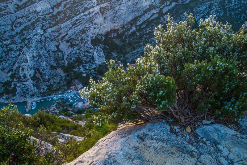 marseille,calanque,bouche du rhone, france Plant Rock Nature Water Scenics - Nature Beauty In Nature Rock - Object Tree No People Solid Tranquility Day Land Environment Mountain Landscape Outdoors Tranquil Scene Non-urban Scene