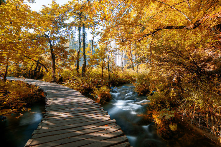 Stream flowing amidst trees in forest during autumn