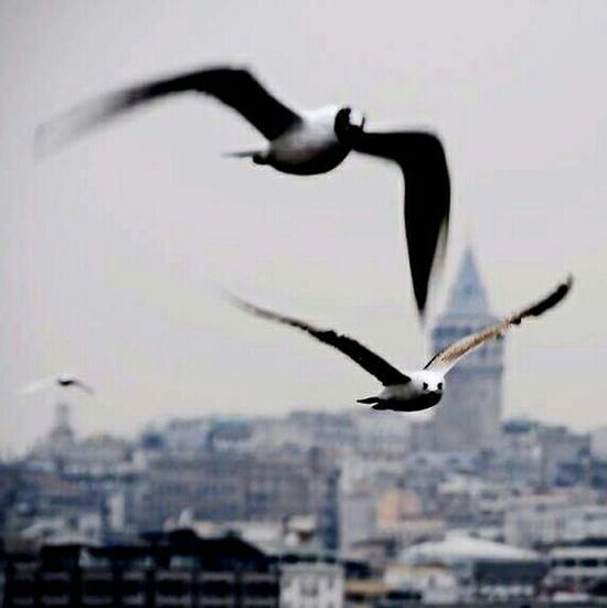 ıstanbul Bogazturu Istanbuldayasam Istanbul Turkey Istanbullovers Istanbul City Istanbulove Istanbul #turkiye Ist_instagram Istanbul - Bosphorus