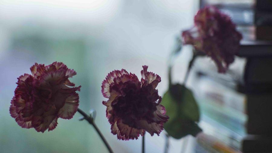 Petal Plant