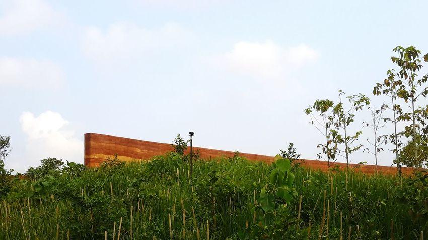ป่าในกรุง Rammed Earth