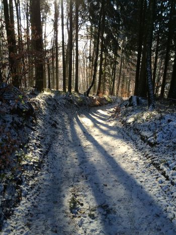 Odenwald  Have A Walk Snow Woods