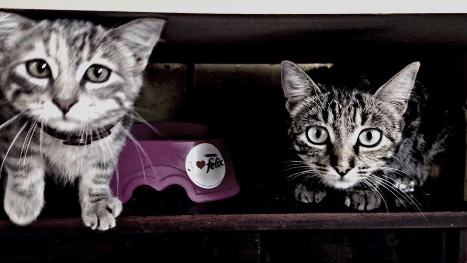 Minnie  Silver ❤️ Cute Pets Ilovemycats