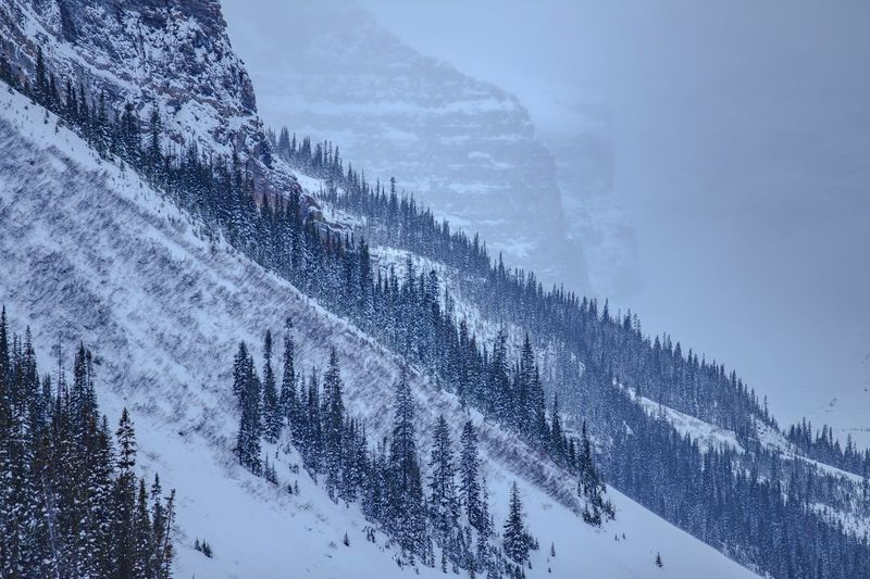 Winter Winter Trees Mountains Snow Snowscape Slope Canon Travel Canada Alberta Banff National Park  Banff  Lake Louise,Alberta Travel Alberta