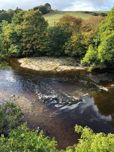 River Swale at Richmond Copy Space Autumn Leaves Autumn River Swale Water Plant Nature Tranquility Day No People Growth Scenics - Nature Reflection Beauty In Nature High Angle View Sky Sunlight