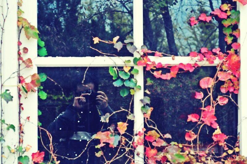 아미미술관 Leaf Plant Day Growth Outdoors Close-up Ivy No People Nature Tree Me