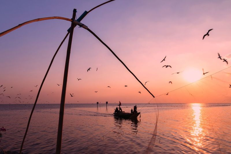 Life in the Sea, Bangpoo see, Samutprakan, Thailand EyeEm Thailand Boat Seagull Thailand Sea Life In Thailand Life In The Sea Travel Thailand Bangpoo Seaside Landmark Sea Thailand Seagulls And Sea Water Sunset Sky Sea Silhouette Vertebrate Holiday Moments Nature Real People Nautical Vessel Orange Color 2018 In One Photograph My Best Photo
