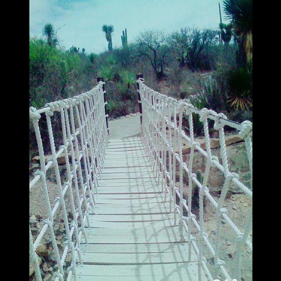 Puente Beautiful Aire Libre Photography Desierto Desert Sol Espacio Libre Viaje Photo Simplicity Simple Excursion Naturaleza Nature Day Reserva Classic