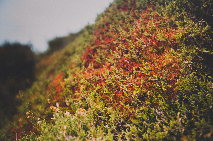Beauty In Nature Close-up Day Freshness Green Color Growth Ireland Moss Nature No People Outdoors Red Tree