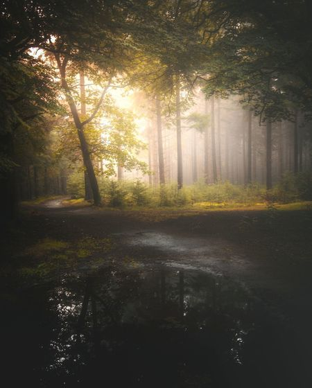 Forest path in the morning Fog Autumn Tree Morning Nature No People Scenics Environment Sunlight Forest Reflection Outdoors Beauty In Nature Leaf Landscape Beauty Dawn