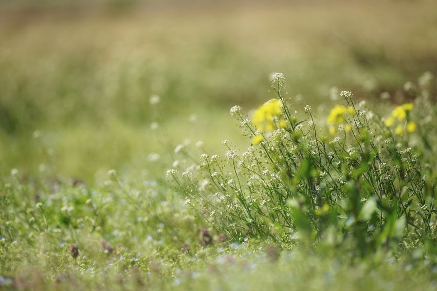 Capture The Moment Springtime Fragility Flowers Depth Of Field Softness Grass Plant Uzuki Of The Flower Beauty In Nature Nature Fine Art Tranquility Selective Focus Fantasy Field Outdoors Low Section Landscapes Full Frame Detail SONY A7ii Sigma EyeEm Best Shots 17_04 Break The Mold TCPM Art Is Everywhere EyeEmNewHere The Great Outdoors - 2017 EyeEm Awards