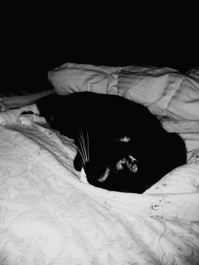 Blackandwhite Photography EyeEm Best Shots - Black + White Tuxedocat Catdreams Preciousthecat