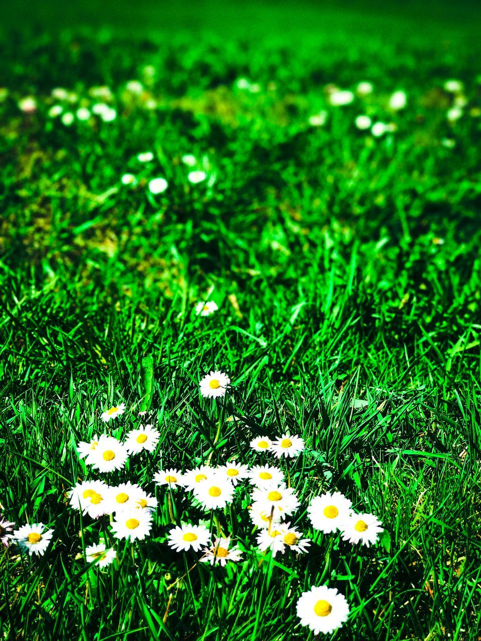 flower, nature, growth, grass, flora, spring, vegetation, freshness, beauty in nature, field, delicate, green color, no people, blooming, uncultivated, plant, fragility, summer, outdoors, flower head, day