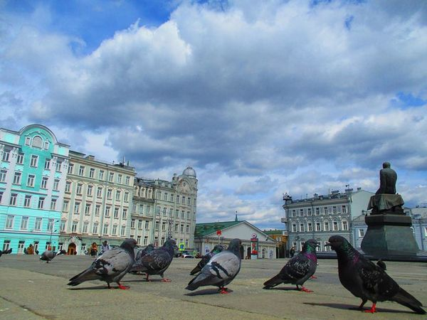 Dostoyevsky and the pigeon gang Sky Clouds And Sky Clouds Pigeon Birds City