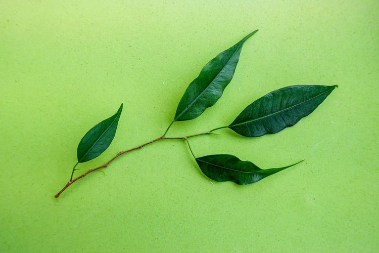 High angle view of green leaves on table