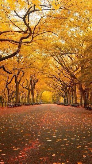 ?? Newyork Beauitful Travelling Bucketlist