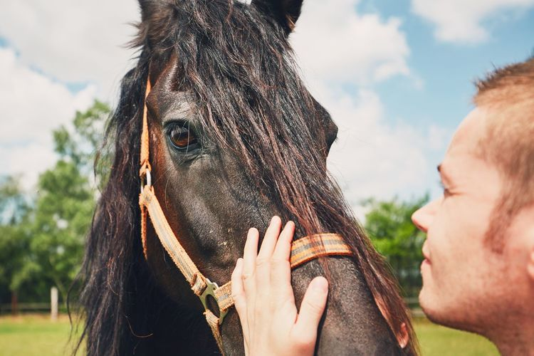Close-up of man stroking horse on sunny day