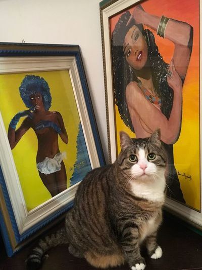 #Photooftheday #picoftheday #gioiaemiliaromagna Domestic Cat Feline Pets Indoors  Domestic Animals Sitting Mammal