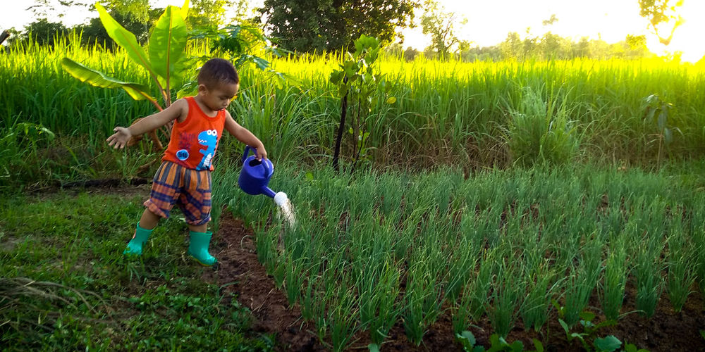 Kids boy bebyboy cute lovely beautiful green natural rice sun growing Sunlight Sun Summer Tree Child Rural Scene Childhood Boys Agriculture Cereal Plant Field Full Length Flower Farm Worker Farmland Rice - Cereal Plant