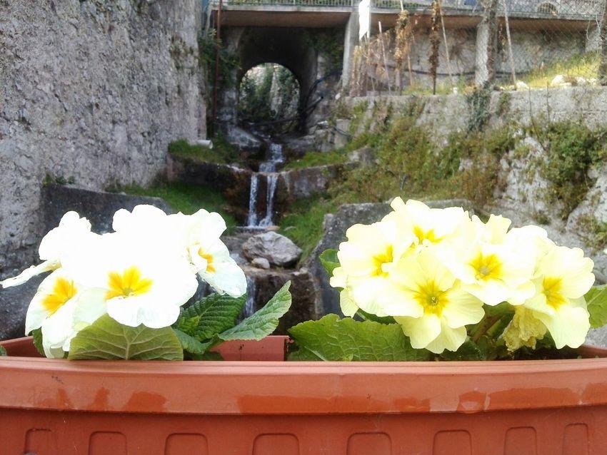 Flowers Nature Landscape_Collection