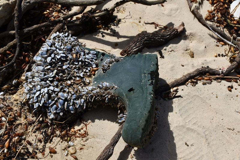 Washed Up Gumboot Covered In Shells Shells GumBoot Sunlight Nature Land Day No People High Angle View Sand Sunny Dirt Close-up Shadow Outdoors Beach