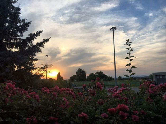 Sky Plant Flower Flowering Plant Sky Beauty In Nature Cloud - Sky Sunset Pink Color Scenics - Nature Tranquil Scene