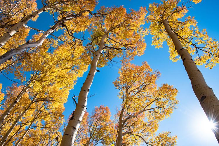 Kenosha Pass Colorado Fall Colors Foliage Fall Aspen Autumn Colors Autumn Gold Fall Beauty
