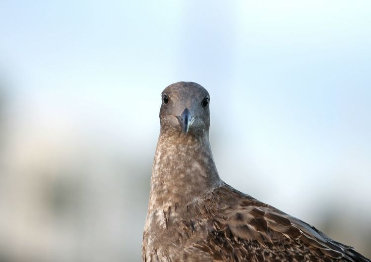 Close-up portrait of seagull