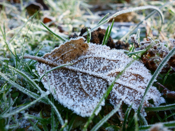 Beauty In Nature Close-up Cold Temperature Day Field Fragility Freshness Frost Frozen Fungus Grass Growth Leaf Nature No People Outdoors Snow Winter