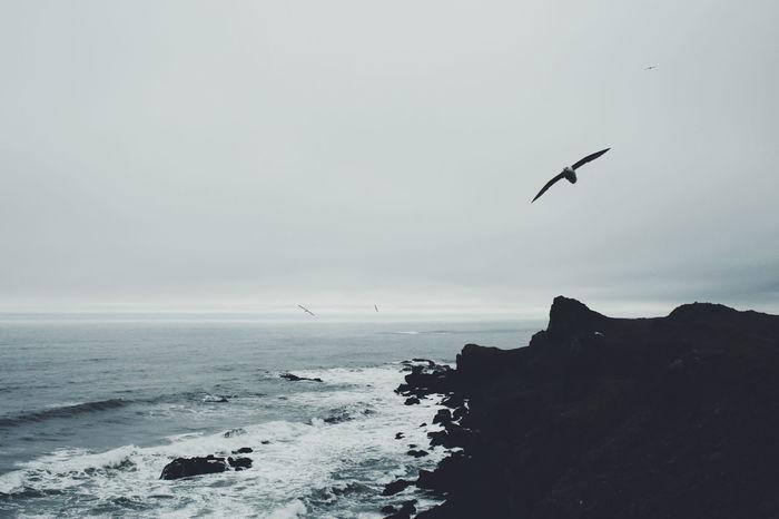 Iceland Coast Seagulls Nature Clouds Nature Photography Outdoors Outside Sea Shore VSCO Vscocam Monochrome