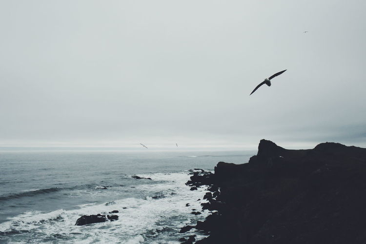 Iceland Coast Seagulls Nature Clouds Nature Photography Outdoors Outside Sea Shore VSCO Vscocam Monochrome