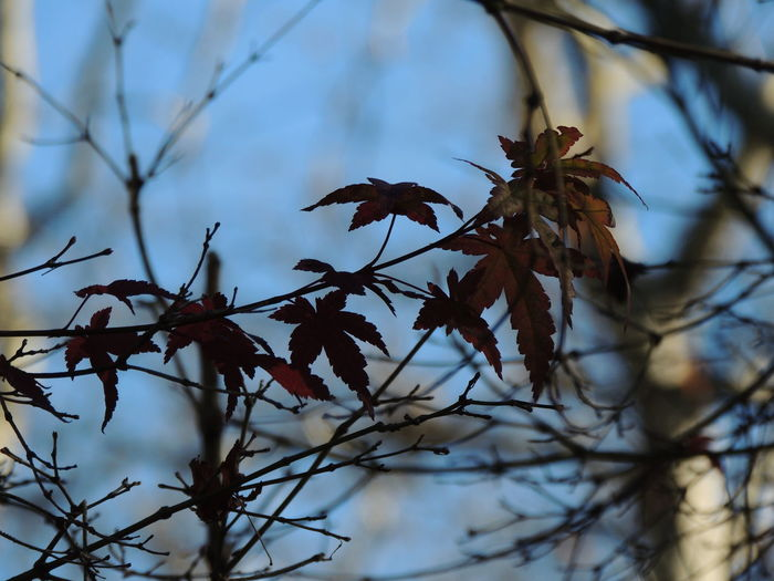 Autumn Beauty In Nature Branch Close-up Day Dried Plant Flower Fragility Growth Leaf Low Angle View Nature No People Outdoors Plant Sky Tree