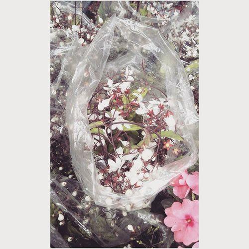 Flower 🌸 🌈 🐝