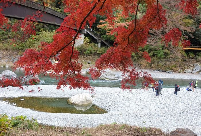 Autumn river Riverside Riverbed Plant Tree Day Nature Water Autumn Red Outdoors Change Lifestyles Large Group Of People Leisure Activity