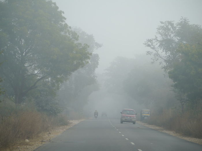 Beauty In Nature Country Road Day Diminishing Perspective Fog Foggy Growth Landscape Mandawa Mandawa, Rajasthan Nature No People Non-urban Scene Outdoors Remote Road Scenics Sky The Way Forward Tranquil Scene Tranquility Tree Vanishing Point Weather