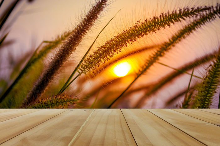 Wooden table for your texture and Sunset sky background montage Coffee Morning Sunlight Sunset_collection Wood Backgrounds Bar Beauty In Nature Close-up Day Evening Growth Montage Nature No People Outdoors Sky Sunset Table Tree Wooden