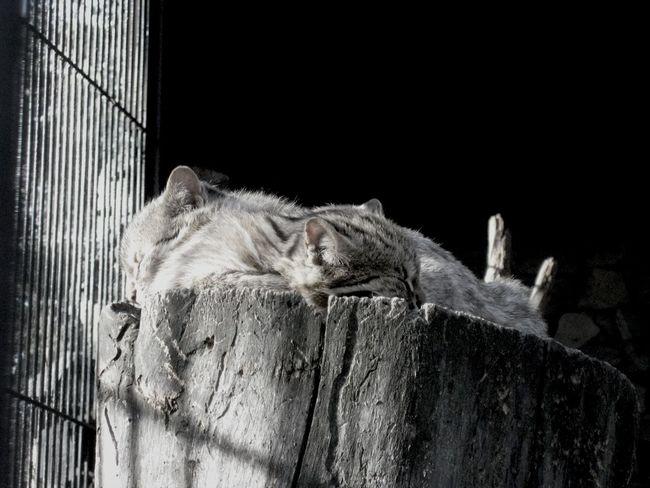 Animals Zoo Cats Cute Cats спящие милахи ^^