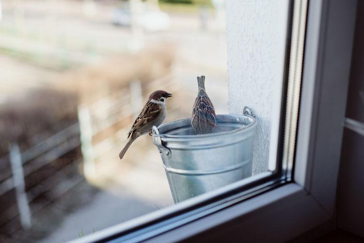 Bird perching on a window