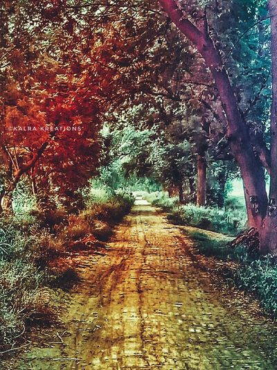 Tree The Way Forward Nature Beauty In Nature Outdoors Day Growth No People Sky Mothernature Colourful Color Photography KalraKreations Traveling Home For The Holidays Finding New Frontiers