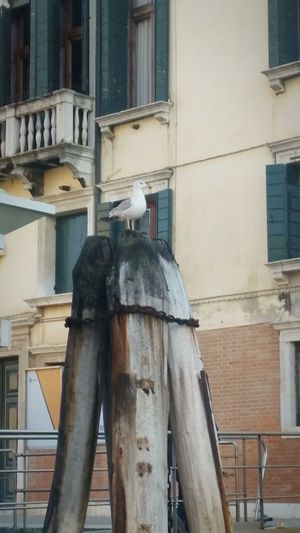 Venice, Italy Relaxing Wood - Material Reality Moments Birds Wood Art