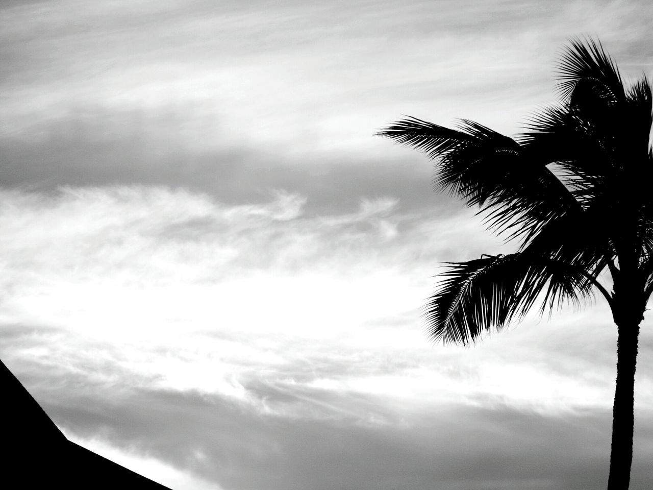 palm tree, sky, tree, cloud - sky, low angle view, no people, beauty in nature, nature, silhouette, palm frond, scenics, outdoors, growth, day