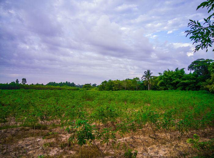 Nature view Cloud - Sky Sky Plant Landscape Field Land Environment Tree Nature Scenics - Nature Green Color Tranquility Beauty In Nature Tranquil Scene Growth Grass Outdoors Day Rural Scene