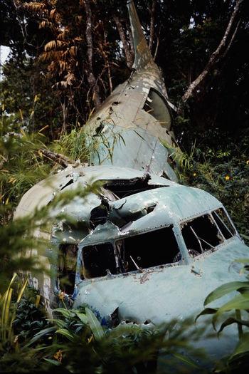 Australia Australia Bad Condition Broken Crashed Crashed Plane Kuranda Outdoors Queensland Rain Forest Transportation